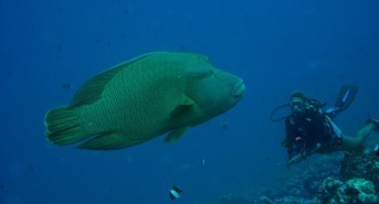 Dive Centre of the Day: Euro-Divers Club Med Kani, Maldives