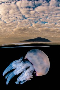 jellyfish under the vesuvius