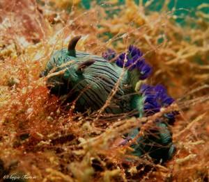 nudi in a haystack