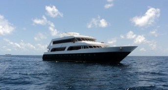 Check out these Maldives and Red Sea liveaboard diving deals from Emperor Divers