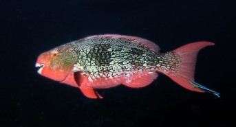 Diving the Indian Ocean Reefs