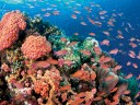 The Philippines: A Diver's Dream Destination