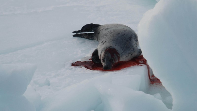 Ask Justin Trudeau to End Canada's Commercial Seal Slaughter