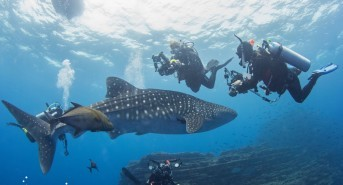 Dancing with Mantas and an unexpected whaleshark
