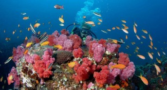 Jill-with-corals-and-fish.jpg