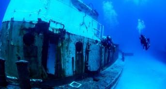 tug-manatee-w-divers.jpg