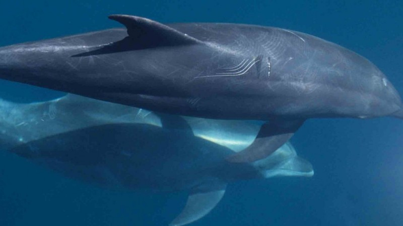 Volunteers needed for 16th annual National Whale and Dolphin Watch