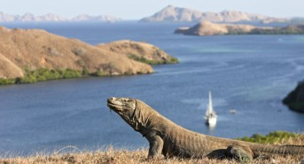 Komodo-National-Park-2.jpg
