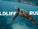 Wildlife Rules: The Do's and Don'ts with Aquatic Creatures