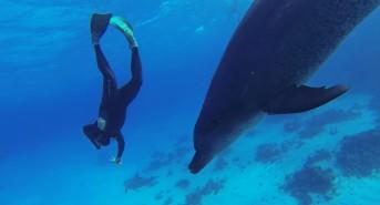 stevedolphins.jpg