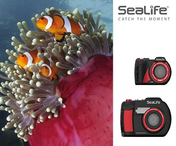 SeaLife Jan 19 345 x 287 sidebar