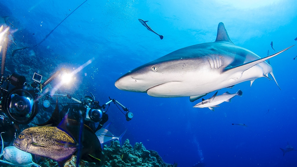 Best photos of April 2019 from Mike Ball Dive Expeditions