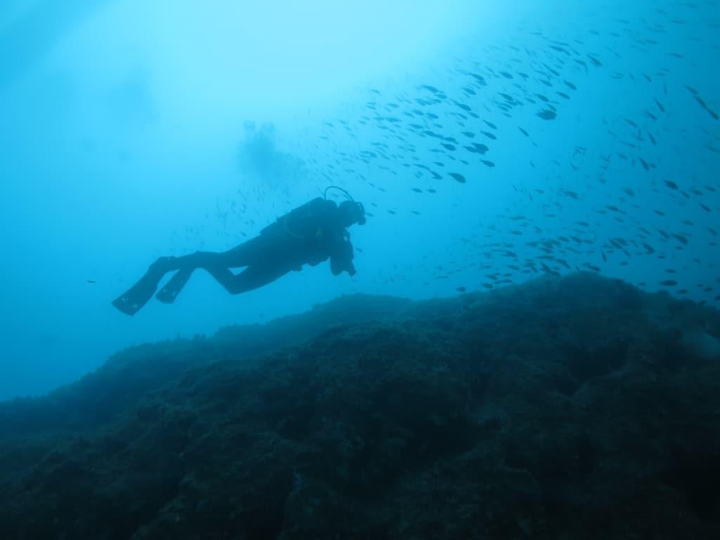 UK schools find the Costa Brava very fishy