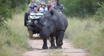 Kruger-rhino-and-people-safari-Large.jpg