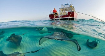 Stingray-City-with-Sunset-Divers-Boat.jpg