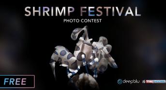 shrimp-festival-banner.png