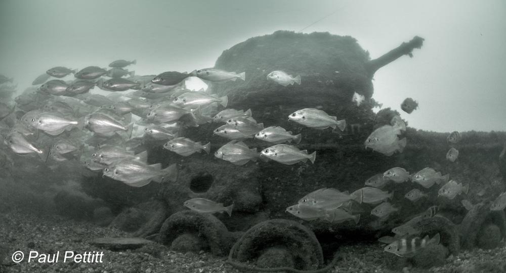 Valentine-Tank-Poole-Harbour.-Paul-Pettitt-8.jpg