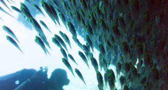 Glassfish-Dunraven.jpg