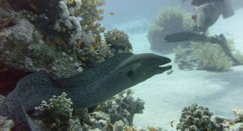 Moray-Eel-Out.jpg