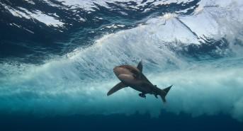 Oceanic-under-the-waves-best-version-1-of-1.jpg