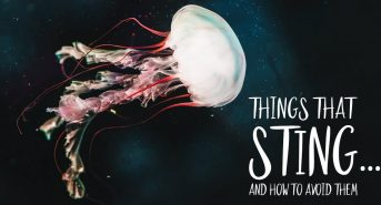 Things-that-sting-how-to-avoid-them_FB.jpg