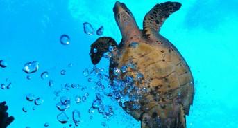 Turtle-Bubble-Bath2.jpg