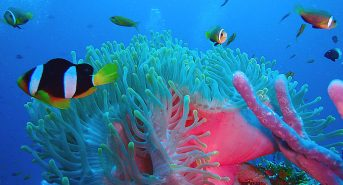 anemone-peps.jpg-1.jpg