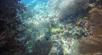 coral-garden1.jpg