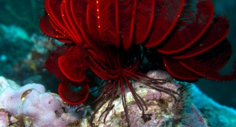 ff-14-red-feather-star3.jpg