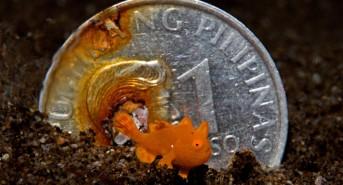 macro-peso-coin.jpg