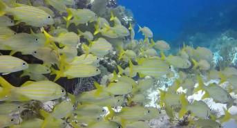 molasses-reef-dive-trip.jpg