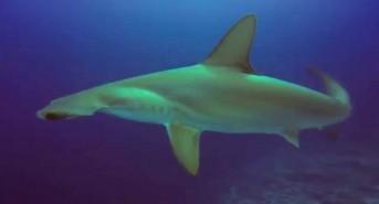 project-shark.jpg